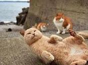 Japón: habitantes crean 'isla gatos'