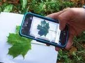 Leafsnap, Identifica Árboles través Hojas