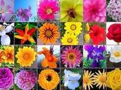Para humanos mascotas. Flores Bach
