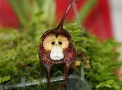 ¿sabías existe ''planta'' cara mono?