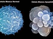 ¿sabías miles millones células suicidan diariamente?