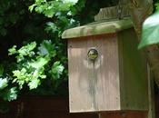Consejos sobre cajas-nido para aves silvestres