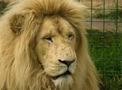 Fenómeno LION, vamos conseguir contactos LinkedIn