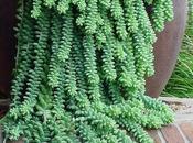 Plantas interior otras: crasas suculentas