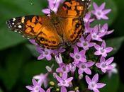 Curso Diseño Paisajes plantas nativas. Jardines para atraer aves mariposas. 2010.