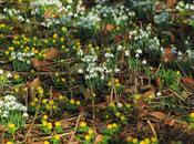 Sewerby Hall Gardens invierno