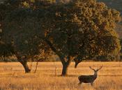 Proyecto Parques Nacionales para impulsar desarrollo sostenible municipios afectados