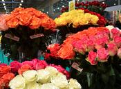 Valentín Exportadores Flores