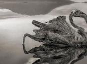 misterios lago natron, animales petrificados