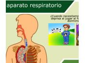 """aparato respiratorio """"2do ciclo"""" Interactivo"""