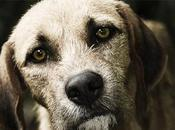 Mascotas 'seniors': Cuando nuestras mascotas pintan canas