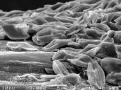 ¿sabías bacterias también pueden 'oler'?