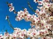 ¿Porqué florecen almendros temprano?