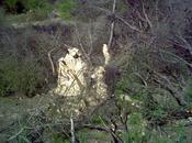 Ciclogénesis explosiva ladera Pico Aguila