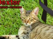 Adiós amigo Dexter