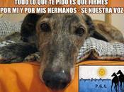 Petición contra carreras galgos argentina.