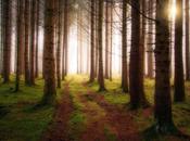 blogosfera deja bosque? resumen