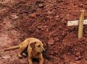 Fotos demuestran porqué perro mejor amigo hombre