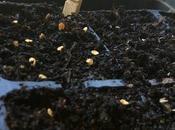 Preparando semillero