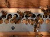 Superalimentos; polen