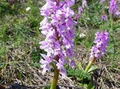 orquídeas otros bichos... Orchids other small animals