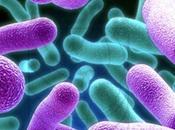 Tuberculosis: logran detener crecimiento bacteria produce