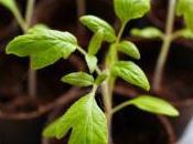 hablan plantas cuando escuchamos?