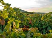 LAVINIA dedica ocho semanas vinos Castilla León