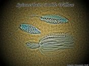Spinnerbait Doble Willow