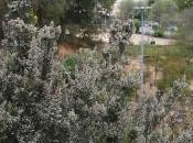 Parque Moret (Huelva) primavera