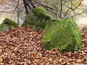 Piedras camino