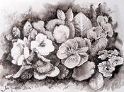 Pluma tintas drawings Namiki Falcon