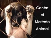Quien cruel animales, puede buena persona