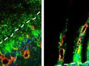 Crean implante biodegradable estimula regeneración tejido cerebral
