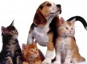 Francia, perros gatos tienen derechos