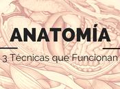 Cómo Estudiar Anatomía: Técnicas Funcionan