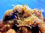 proteína hallada coral Australia bloquea