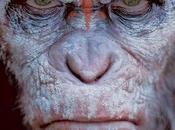 "Nuevo impresionante full trailer amanecer planeta simios"""