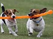 deporte mascotas