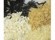 malo perros coman arroz?