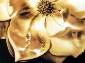 Cineterapia oncológica: Magnolia. EEUU. 1999. Paul Thomas Anderson