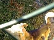 Perros muriéndose hambre, urgente (burgos)