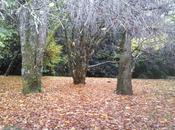 Jardín árboles grandes