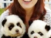 Tiger Panda dogs, nueva moda china