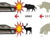 Cómo evitar accidentes tráfico animales reaccionar ante colisión