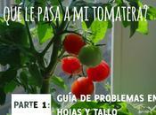 ¿Qué pasa tomatera? Problemas hojas tallo