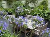 Plantas repelentes mosquitos