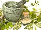 plantas medicinales para Huerto