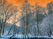 Booktrailer: bosque rojo (Javier Castro Lechet)