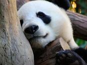 Google Panda ataca nuevo, prepara defensa